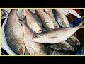 How To Cut Hilsa (ilish) Fish Easily | Bangladesh National Fish | Traditional Bengali Style Cutting
