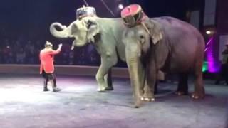 Прикол цирк Кобзов смешные слоны