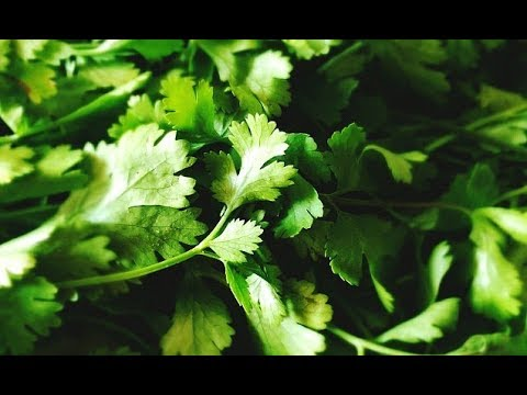 Do YOU hate cilantro The answer may be in your DNA