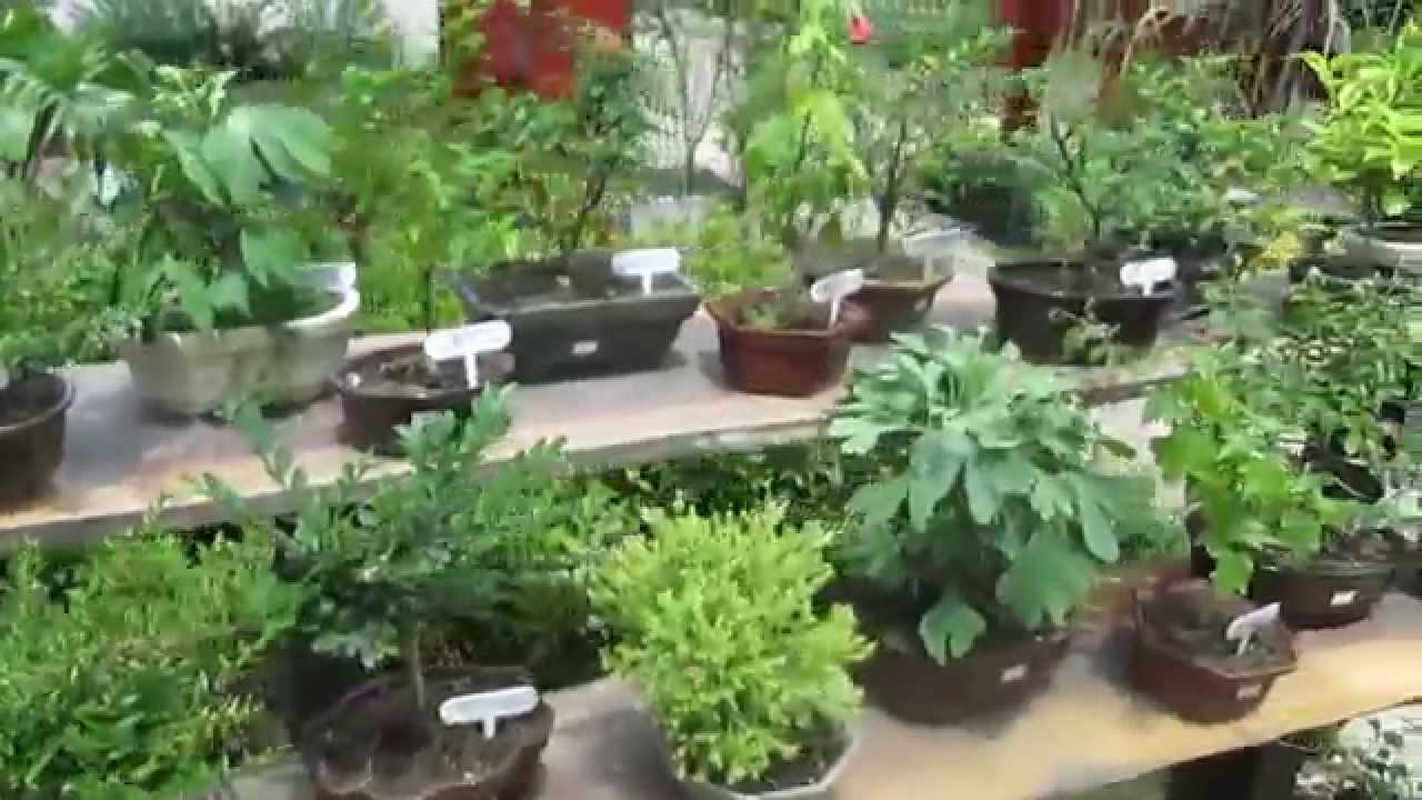 Jard n japon s plantas youtube for Plantas jardin japones