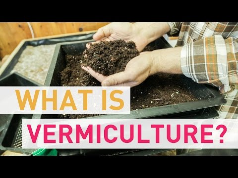 What Is Vermiculture?