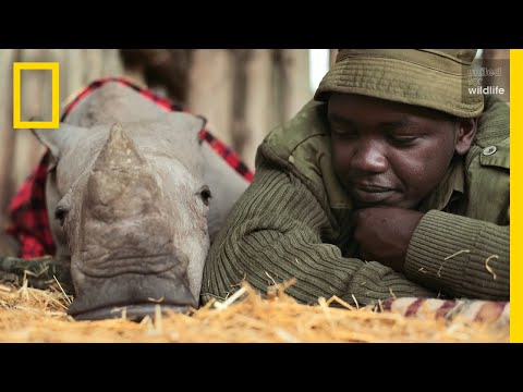 Meet the Heroes Who Protect the Last Northern White Rhinos in the World | Short Film Showcase