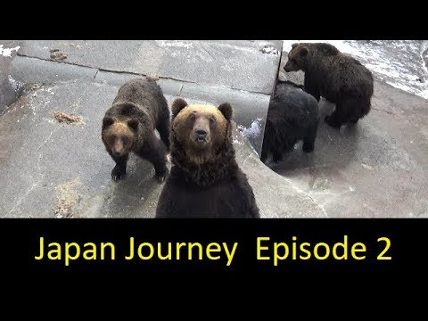 Japan Journey | Episode 2 | Visiting Noboribetsu Bear Park and Going to Hakodate!