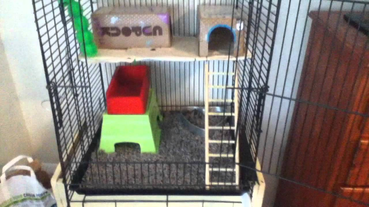 how to keep rat cage from smelling