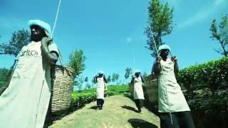 Company profile of Venture Tea Sri Lanka.
