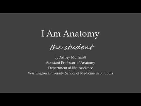 I Am Anatomy Ashley Morhardt Student Washington University School