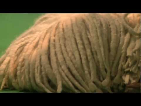 dfs Crufts 2011 Day 2 - Best of Breed Komondor Dog