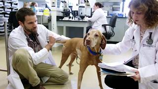 Cutting-edge science moves to the clinic to help 'our furry friends' fight cancer thumbnail