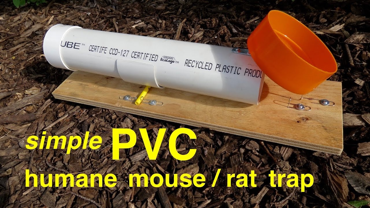 How To Make A Simple Pvc Humane Ratmouse Trap