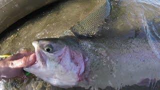 Rainbow Trout on STEROIDS - BIG TROUT from a Kayak (Shadow Cliffs Reservoir; Pleasanton, California)