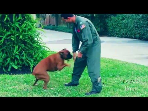 Dogs welcoming 2 home soldiers 2015 HD ( Perros dando la bienvenida a sus dueños )