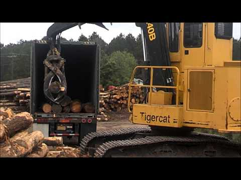 Exporting Logs to India