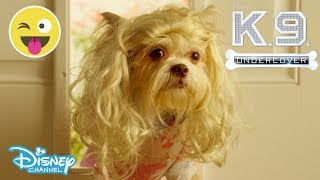 K.C Undercover   Booby Trapped - K-9 Undercover ????   Official Disney Channel UK