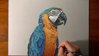 Drawing a realistic parrot