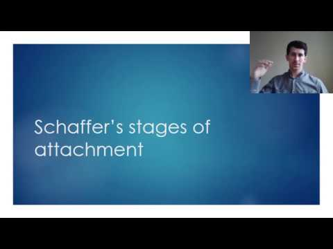 Attachment stages of attachment