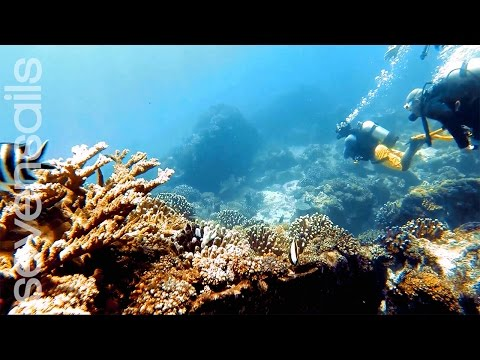SevenSails - Diving in Seychelles