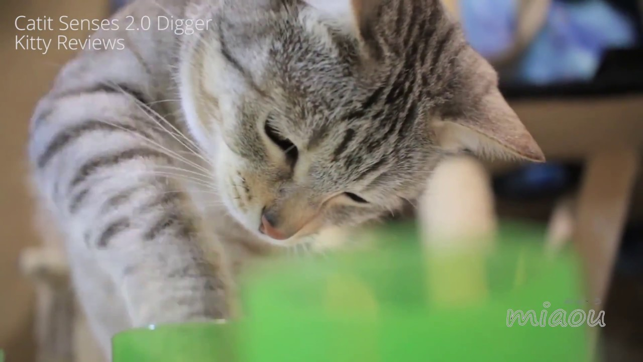 catit senses 2 0 digger kitty reviews youtube. Black Bedroom Furniture Sets. Home Design Ideas