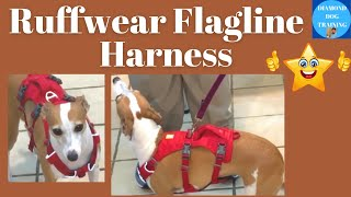 Ruffwear Flagline Review/Best Harness For Your Dog Italian Greyhound and other Similarly Built Dogs
