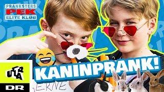 PRANK DINE VENNER med Bertil og Pelle fra PEK - Pranksters Elite Klub! | Ultra
