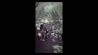 Шок!Помогите спасти щенка!🐶ОН МОЖЕТ УМЕРЕТЬ!!!!😥😣😱😵