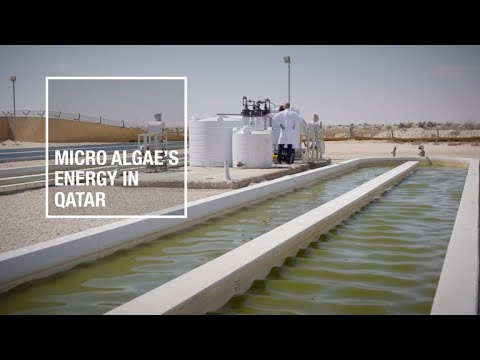 Micro Algae's energy in Qatar | Total