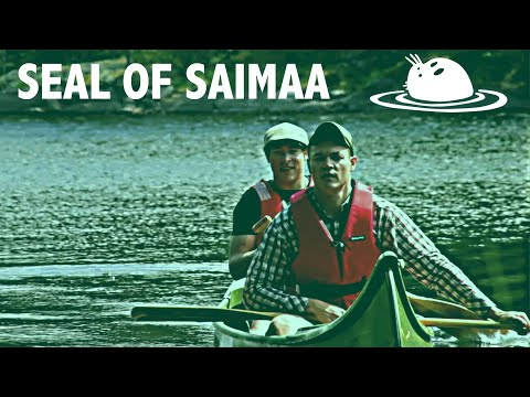 Seal of Saimaa - English
