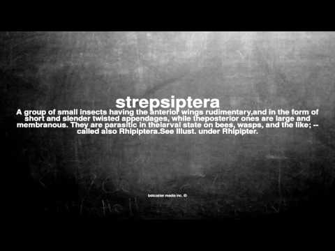 What does strepsiptera mean