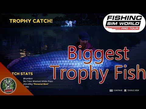 Catching The Biggest Trophy Arapaima Fish In Fishing Sim World Pro Tour |