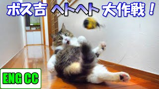 BossKichi's exhausted play for a quiet night【Eng CC】
