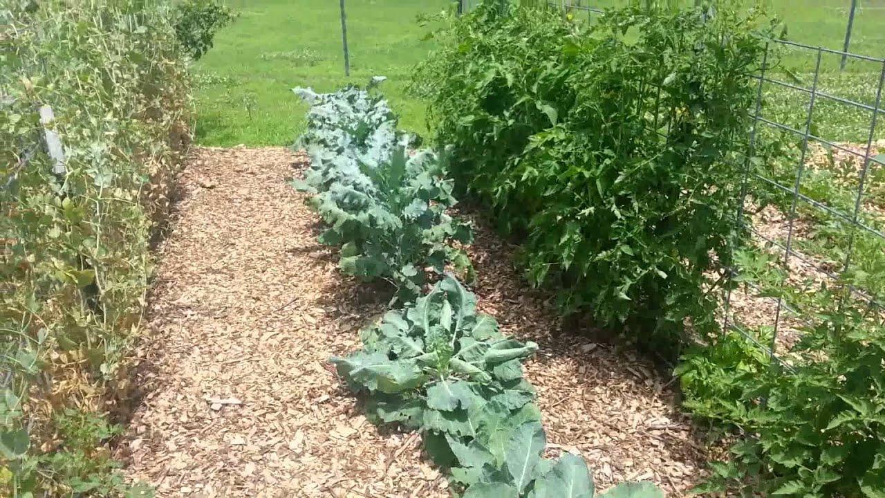 Back To Eden Garden In Northeast Oklahoma Part 3 Youtube