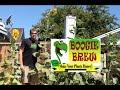 Boogie Brew Product Testing 10 Week Update