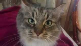 Любовь кошки безгранична.Смотреть всем!!!