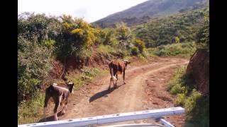 tazarine -bougara- un beau paysage oubliée