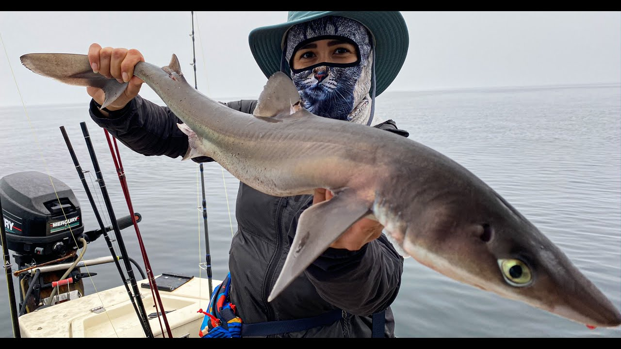 MUST TRY SHARK RECIPE Catch and Cook Spiny Dogfish