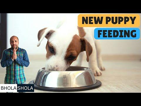 Pet Care - New Puppy Feeding - Bhola Shola