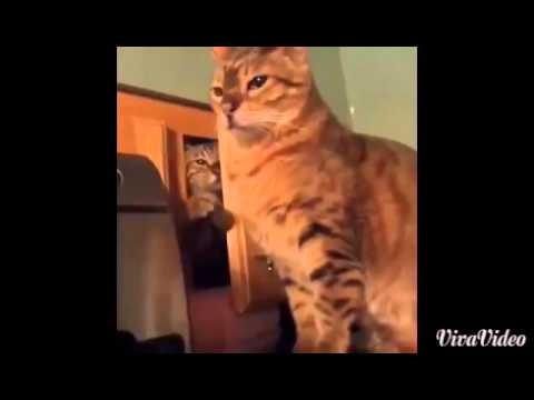 The Sneaky Cat Vine YouTube - Sneaky cat got caught