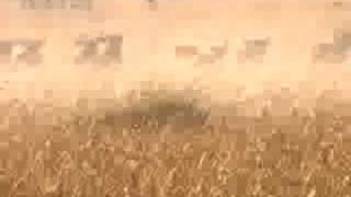 Cheetah vs wildebeest - BBC wildlife