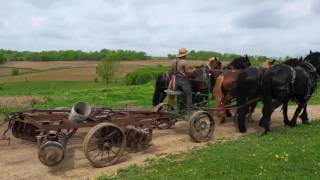 Amish farming - 6-horse power plow