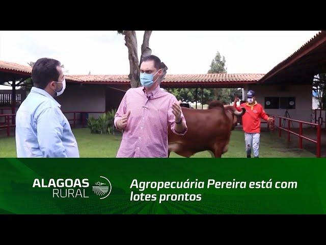 Agropecuária Pereira está com lotes prontos para o VI Leilão Genética de Berço