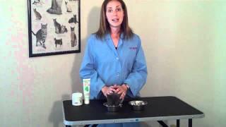 Dealing With Feline Upper Respiratory Infections (URI)