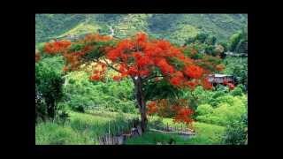 Bunga Flamboyan Sundari Soekotjo