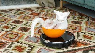 Кот, Наташа и робот-пылесос iLife