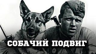 «Собачий бой»: как 150 псов «РАЗОРВАЛИ» два немецких батальона