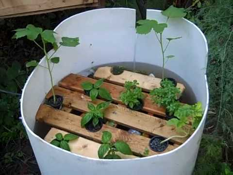 Peeponics hydroponics without the chemicals aquaponics without