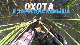 Ловля сазана в зарослях камыша Рыбалка с Рогаткой