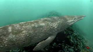 Les dinosaures de la mer - Digifish ancien ocean