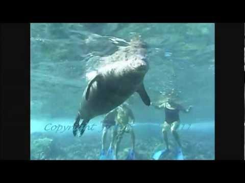 Hawaiian Monk Seal R307 @  Molokini Island Maui Hawaii