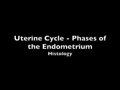 dating secretory endometrium
