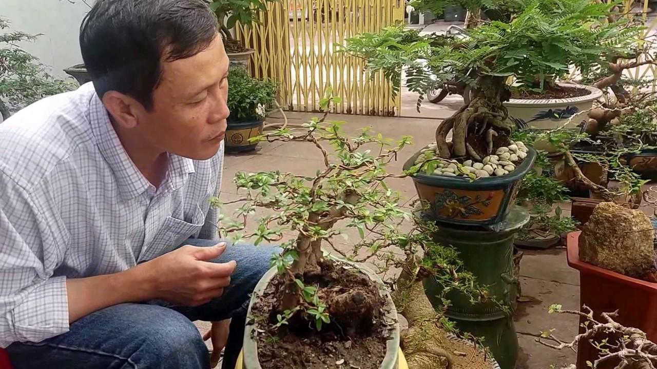 Tạo cây Trân Châu thế Huynh đệ tương thân