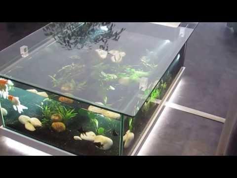 Cмотреть видео Aquarium d'eau douce table aquarium amazone Odyssee Aquarium